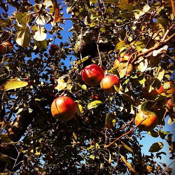 Apple Orchard (via Instagram)