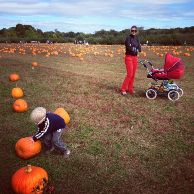 Pumpkins! (via Instagram)