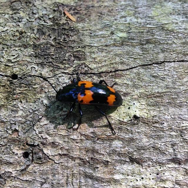Bug Find