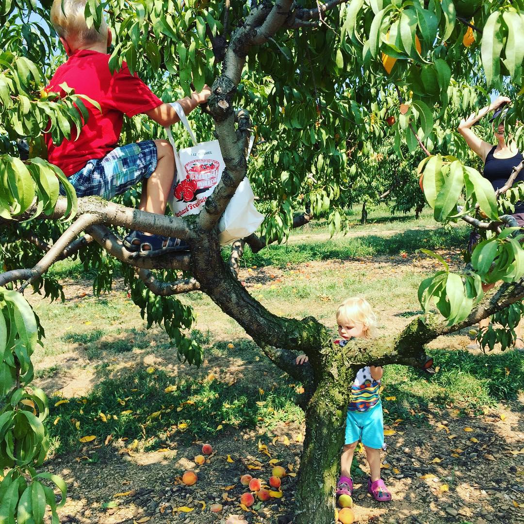 Peaches @ Strites' Orchard Farm Market and Bakery