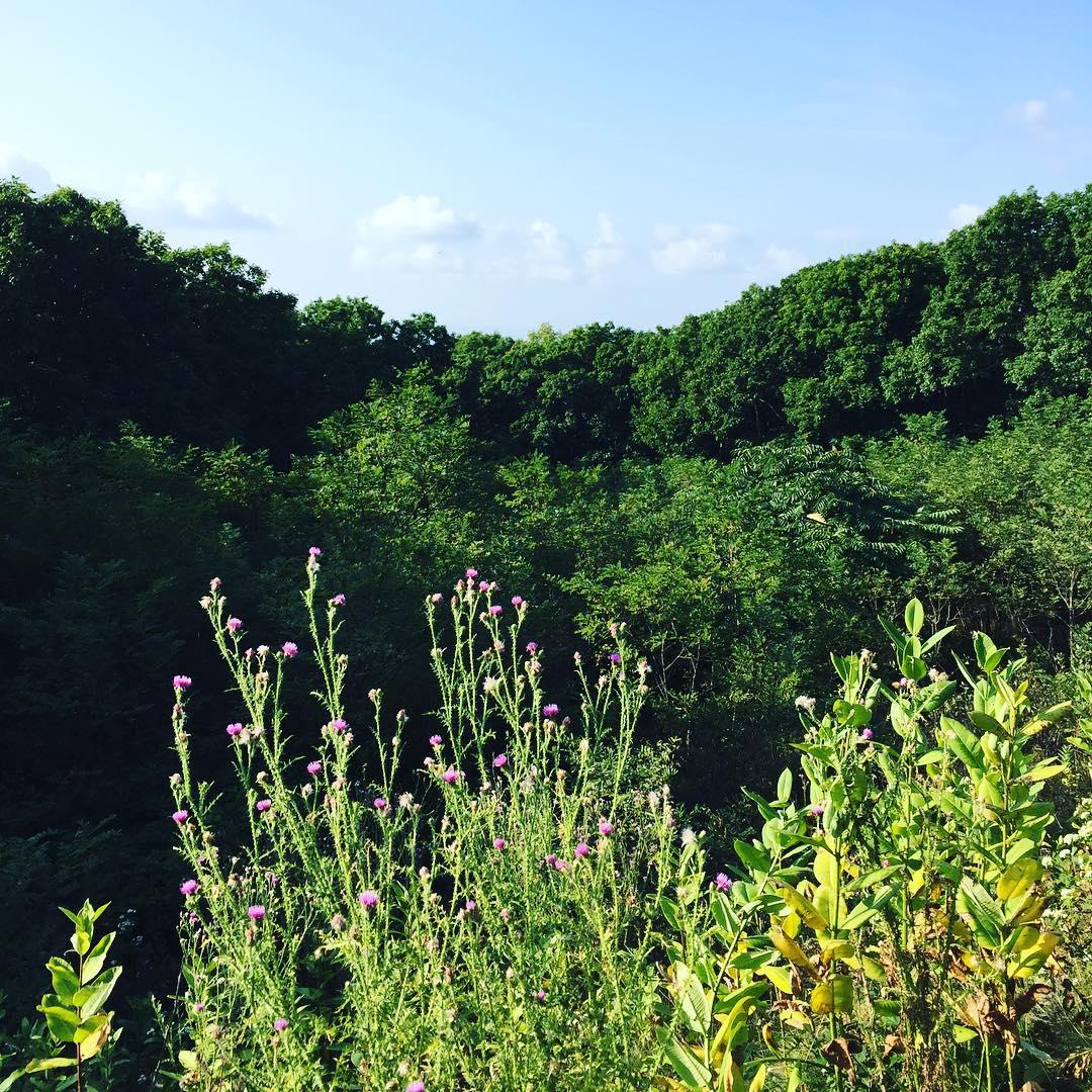 Shenandoah @ Shenandoah National Park