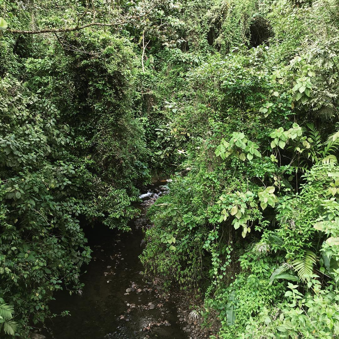 Costa Rican Jungle