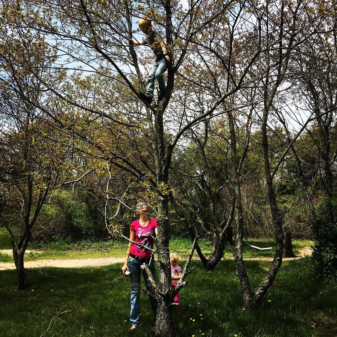 Tree Climbing at FBF