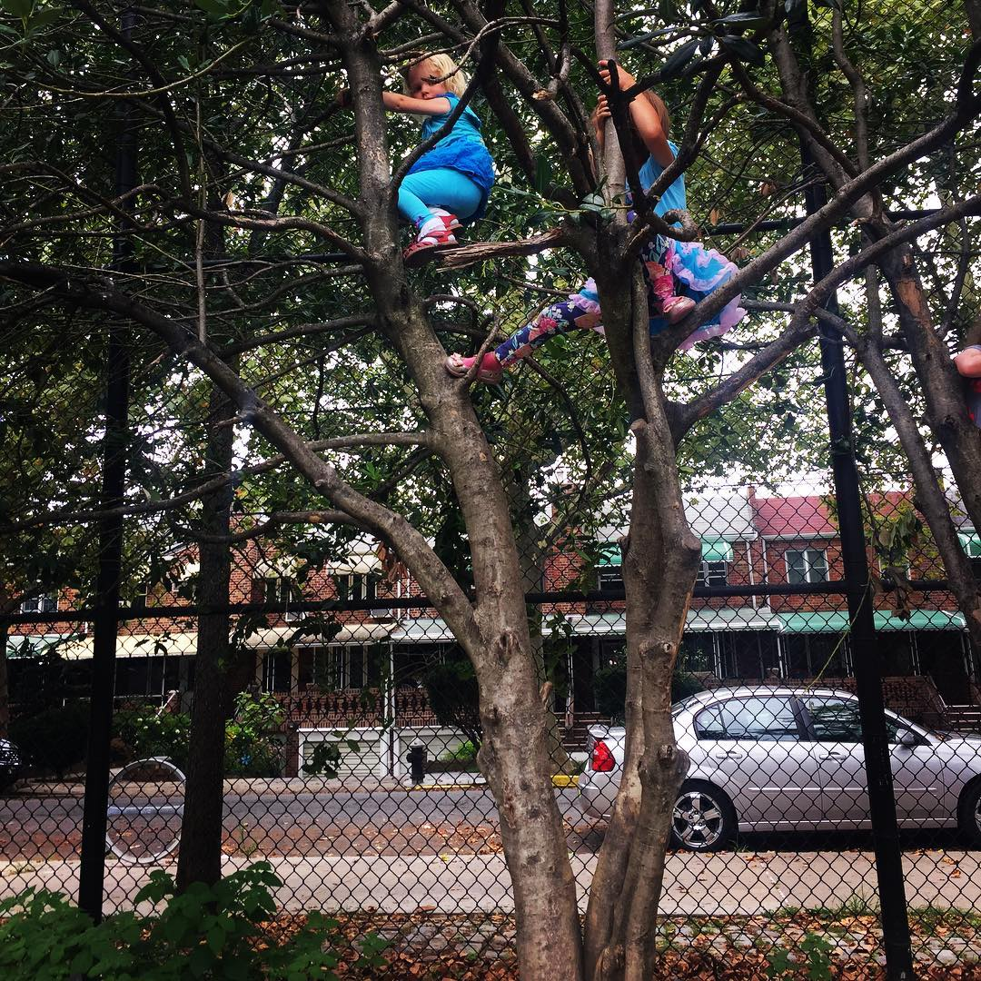 Another Tree Climber