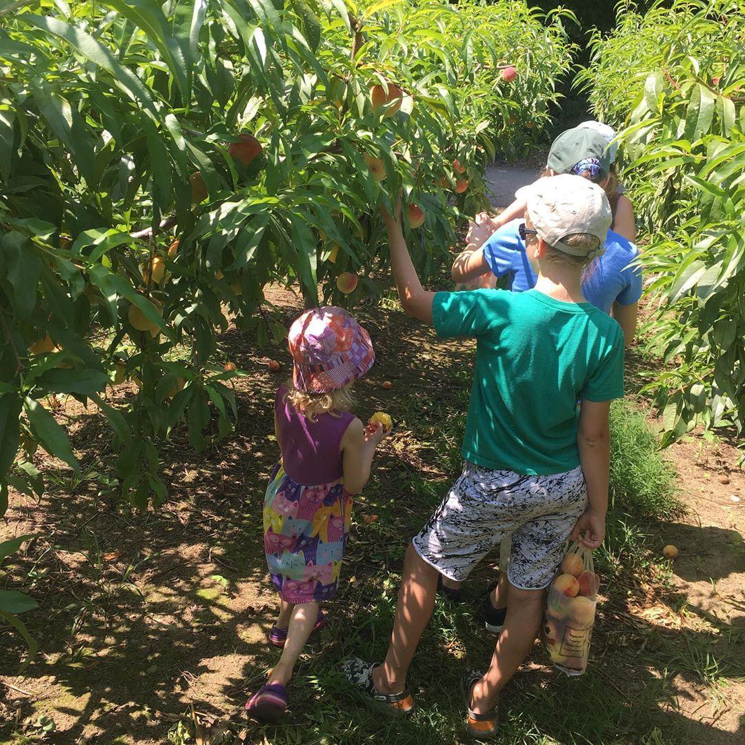 Picking Peaches